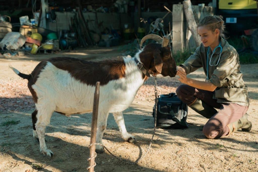 Fotograma de 'Una veterinaria en la Borgoña'