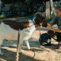 'Una veterinaria en la Borgoña' (Julie Manoukian, 2019)